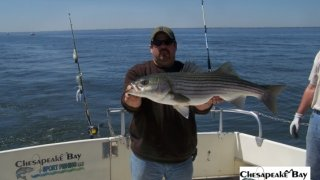 Chesapeake Bay Trophy Rockfish 4 #32