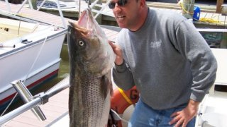 Chesapeake Bay Trophy Rockfish 2 #23
