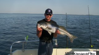 Chesapeake Bay Trophy Rockfish 4 #48