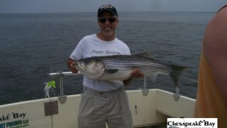 Chesapeake Bay Nice Rockfish 2 #26