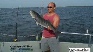 Chesapeake Bay Trophy Rockfish 3 #5