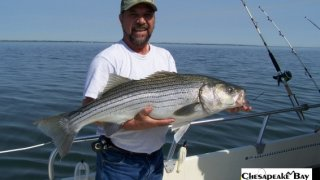 Chesapeake Bay Trophy Rockfish 3 #28