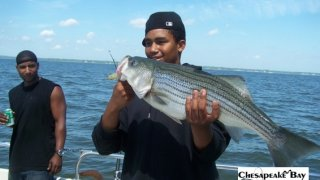 Chesapeake Bay Nice Rockfish #18