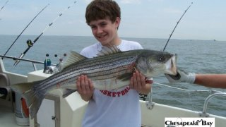 Chesapeake Bay Trophy Rockfish 2 #3