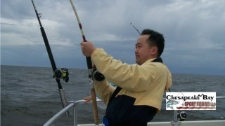 Chesapeake Bay Action Shots #5