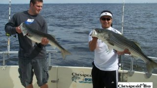 Chesapeake Bay Nice Rockfish 2 #21