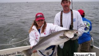 Chesapeake Bay Trophy Rockfish #36