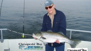 Chesapeake Bay Trophy Rockfish #25
