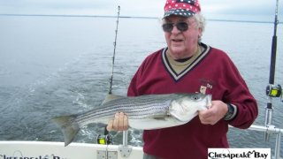 Chesapeake Bay Nice Rockfish 3 #32