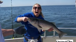 Chesapeake Bay Trophy Rockfish 4 #43