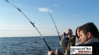 Chesapeake Bay Action Shots #2