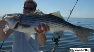 Chesapeake Bay Trophy Rockfish 4 #18