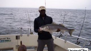 Chesapeake Bay Trophy Rockfish 4 #65