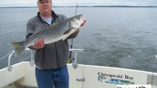 Chesapeake Bay Trophy Rockfish 4 #76