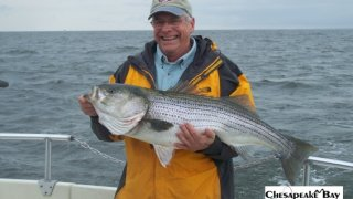 Chesapeake Bay Trophy Rockfish 4 #55