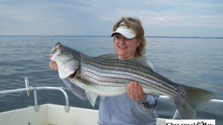 Chesapeake Bay Trophy Rockfish 4 #73