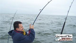 Chesapeake Bay Action Shots #16