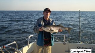 Chesapeake Bay Nice Rockfish 3 #14