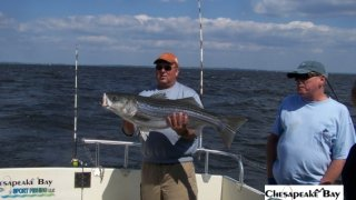 Chesapeake Bay Trophy Rockfish 3 #16