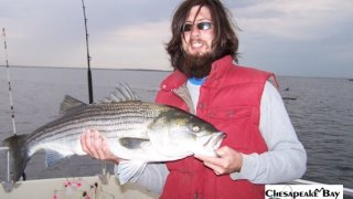 Chesapeake Bay Trophy Rockfish 2 #9