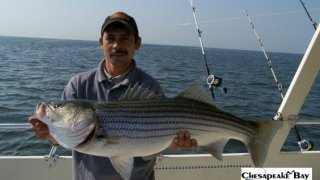 Chesapeake Bay Trophy Rockfish #21
