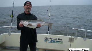 Chesapeake Bay Nice Rockfish 2 #31