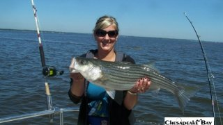Chesapeake Bay Nice Rockfish 2 #35