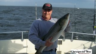 Chesapeake Bay Nice Rockfish #6