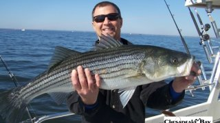 Chesapeake Bay Trophy Rockfish 4 #14