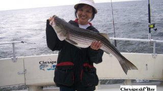 Chesapeake Bay Trophy Rockfish #12