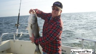 Chesapeake Bay Nice Rockfish #1