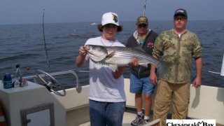 Chesapeake Bay Nice Rockfish #32