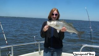 Chesapeake Bay Nice Rockfish 2 #38