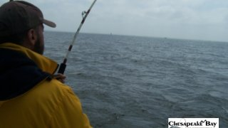 Chesapeake Bay Action Shots #22