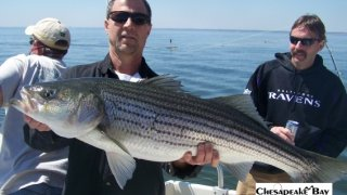 Chesapeake Bay Trophy Rockfish 4 #78