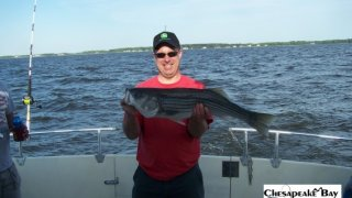 Chesapeake Bay Nice Rockfish 2 #24