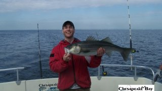 Chesapeake Bay Nice Rockfish 3 #5