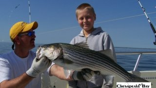 Chesapeake Bay Trophy Rockfish 3 #27