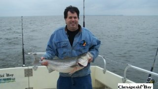 Chesapeake Bay Nice Rockfish 2 #32