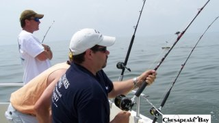 Chesapeake Bay Action Shots 2 #22