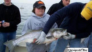 Chesapeake Bay Trophy Rockfish 2 #2