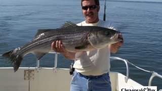 Chesapeake Bay Trophy Rockfish #38