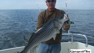 Chesapeake Bay Trophy Rockfish 4 #37