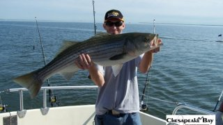 Chesapeake Bay Trophy Rockfish #37