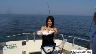 Chesapeake Bay Nice Rockfish 2 #9