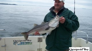 Chesapeake Bay Nice Rockfish 3 #31