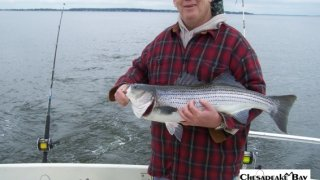 Chesapeake Bay Nice Rockfish 3 #33