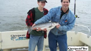 Chesapeake Bay Nice Rockfish 2 #33