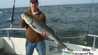 Chesapeake Bay Trophy Rockfish 3 #4