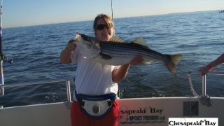Chesapeake Bay Trophy Rockfish 4 #26